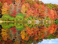 Autumn Kaleidoscope III
