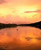 BRAZIL, Agua Boa, Agua Boa River, a crocodile feeding at sunset deep in the Amazon jungle