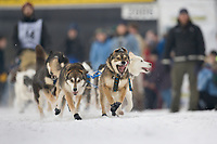 Musher Phil Joy in Fairbanks on the Chena River at the start of the 1000 mile Yukon Quest sled dog race 2006, between Fairbanks, Alaska and Whitehorse, Yukon. Dubbed the toughest dogsled race in the world.