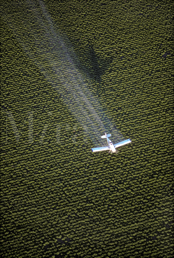 Crop Dusting, Antioch, California