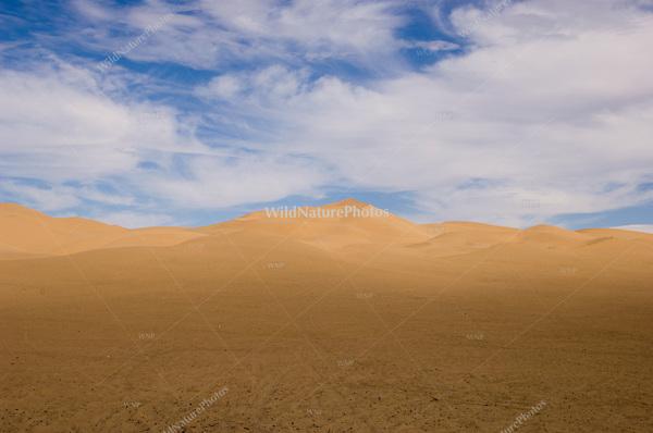 Sand Dunes and Flowers; Algodones Dunes, California