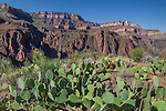 Grand Canyon National Park, Arizona .  John offers private photo tours in Arizona and and Colorado. Year-round.