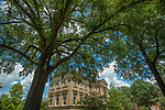 There the trees lift high their branches.  Photo by Kevin Bain/Ole Miss Communications