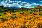 Tom Mackie, LANDSCAPES, LANDSCHAFTEN, PAISAJES, photos,+America, American, California, Lake Elsinore, North America, Tom Mackie, USA, bloom, blooming, blossom, blossoms, california+poppies, cloud, clouds, color, colorful, colour, colourful, floral descriptions, flower, flowers, horizontal, horizontals, na+tural, natural landscape, nature, orange, outdoors, scenery, scenic, super bloom, travel, weather, wildflower, wildflowers,Am+erica, American, California, Lake Elsinore, North America, Tom Mackie, USA, bloom, blooming, blossom, blossoms, california po+,GBTM190058-1,#l#, EVERYDAY