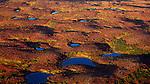 Kettle Ponds in Fall, Denali National Park, Alaska