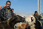 A Palestinians buy goats and sheep at a market in preparation for the upcoming Eid al-Adha festival in the West Bank city of Nablus, on Nov. 26, 2009. Muslims worldwide are preparing for the Eid al-Adha festival, with the sacrificial killing of sheep, goats, cows or camels. Photo By Nedal Shtieh