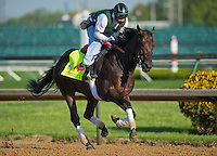 Itsmyluckyday, trained by Eddie Plesa, Jr,, during morning workouts for the Kentucky Derby at Churchill Downs in Louisville, Kentucky on April 30, 2013.