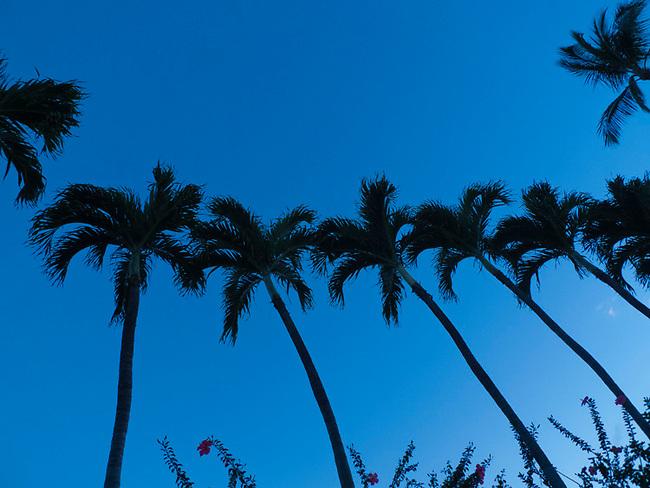 Palm trees at Kehei, Maui, Hawaii