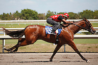 #105Fasig-Tipton Florida Sale,Under Tack Show. Palm Meadows Florida 03-23-2012 Arron Haggart/Eclipse Sportswire.