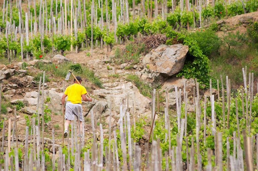 working the soil in the vineyard cornas rhone france