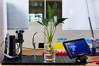 A plant used in Harpreet Sareen's Cyborg Botany project stands on a table in the Fluid Interfaces Group lab space at MIT's Media Lab in Cambridge, Massachusetts, USA, seen here on Tues., April 25, 2017. Sareen is a grad student and research assistant in the Fluid Interfaces Group, led by Pattie Maes. The project embeds electronics and sensors in living plants that can, among other possibilities, detect soil or water impurities. This plant can detect lead in soil or water.