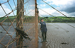 Walter Davidson, the last full-time salmon netter on the Solway in south-west Scotland, cleans weed from his stake net at Creetown, Dumfries and Galloway. Walter is a fourth generation salmon netter and lives in a bothy during the week during the salmon fishing season which lasts from May until September.