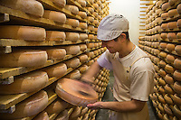 Europe/France/Franche Comt&eacute;/39 /Jura/Morbier: Affinage du fromage AOP Morbier &agrave; la fruiti&egrave;re de Morbier //  France, Jura, Morbier:  making and control of Morbier cheese in an Haut Doubs Dairy <br /> Auto N&deg;: 2013-114