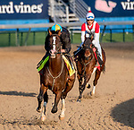 LOUISVILLE, KENTUCKY - APRIL 27: War of Will, trained by Mark Casse, exercises in preparation for the Kentucky Derby at Churchill Downs in Louisville, Kentucky on April 27, 2019. Scott Serio/Eclipse Sportswire/CSM