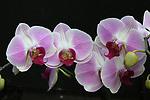 Orchids 4/22/18