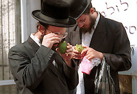 "Ultra-Orthodox Jews shop for unblemished Etrogs, ritual citrons used during the upcoming Sukkot festival, September 30, 2001 in Jerusalem's Mea Shearim neighborhood. The 8-day festival, known in English as the ""Feast of the Tabernacles,"" commemorates the ancient Hebrews' 40 years of wandering in the desert after their exodus from Egypt thousands of years ago. Photo by Quique Kierszenbaum"
