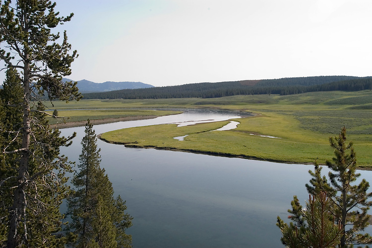 WY: Wyoming, Yellowstone National Park:.Grizzly Overlook in Hayden Valley..Photo #: yellow1090..Photo copyright Lee Foster, 510/549-2202, lee@fostertravel.com, www.fostertravel.com..