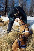 Vet Vern Starks Checks John Barron's Dogs at Galena