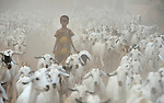 A girl herds goats through the Dadaab refugee camp in northeastern Kenya. Considered the world's largest refugee settlement, Dadaab has swelled with tens of thousands of recent arrivals fleeing drought in Somalia.
