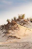 Cape Henlopen State Park Deleware DE