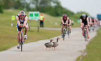 14 MAY 2010 - HOLME PIERREPONT, GBR - A competitor takes a detour around two of the lakes resident geese during the VUE National Emergency Services Triathlon Championships .(PHOTO (C) NIGEL FARROW)