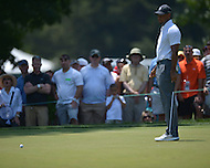 Bethesda, MD - June 27, 2014: Tiger Woods watches his ball miss the hole after putting on 4 in the second round of play at the Quicken Loans National at the Congressional Country Club in Bethesda, MD, June 27, 2014. The tournament was Woods first since he underwent back surgery earlier in the year. He finished the round at +4. (Photo by Don Baxter/Media Images International)