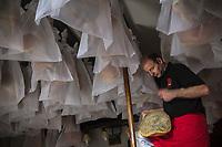 France, Pyr&eacute;n&eacute;es-Atlantiques (64), Pays-Basque, Saint-Jean-le-Vieux, Maison Mayt&eacute;, Eric Mayt&eacute; et ses jambons IIba&iuml;ama  dans son s&eacute;choir // France, Pyrenees Atlantiques, Basque Country, Saint Jean le Vieux,    Maison Mayt&eacute;, Eric Mayt&eacute; with  Iba&iuml;ama  ham, in the  s&eacute;choir, ham aging facility <br /> (Auto N&deg;: 2014-146) <br /> [Non destin&eacute; &agrave; un usage publicitaire - Not intended for an advertising use]