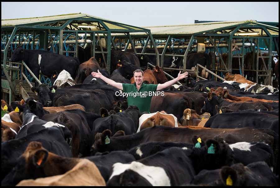 BNPS.co.uk (01202 558833)<br /> Pic: PhilYeomans/BNPS<br /> <br /> Farmer Tom Foot milking his free range herd<br /> <br /> The farm where the cows never come home - Milk maestro Tom Foot has come up with a unique free range system on his farm in the heart of Dorset.<br /> <br /> His 900 cows stay out in the fresh air day and night whatever the weather - and he takes his homemade milking parlour out to them each day.<br /> <br /> Open Air Dairy is the only large scale dairy farm in Europe using the unusual method, which goes entirely against modern farming wisdom where many herds are kept in year round.<br /> <br /> The bold moo-ve is reaping rewards for the family run business that doesn't need to spend a fortune on expensive farm building's and a fixed milking parlour. <br /> <br /> Farmers as far afield as Germany and Zimbabwe have now got in touch to ask Tom to manufacture moo-vable milk parlours for them.<br /> <br /> Tom's wife Kelly now helps out with their own brand of 'Open Air' cheddar, made 100 per cent from the milk of their al fresco cows.