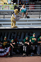 UCF Knights mascot Knightro during a game against the Siena Saints on February 17, 2019 at John Euliano Park in Orlando, Florida.  UCF defeated Siena 7-1.  (Mike Janes/Four Seam Images)