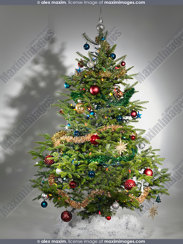 Decorated real Christmas tree isolated on gray background