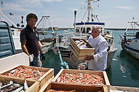 Europe/Italie/Ligurie/Imperia: Bruno Cirino de l'Hostellerie Jérome vient chercher au Port d'Imperia ses Gamberoni et ses poissons [Non destiné à un usage publicitaire - Not intended for an advertising use]