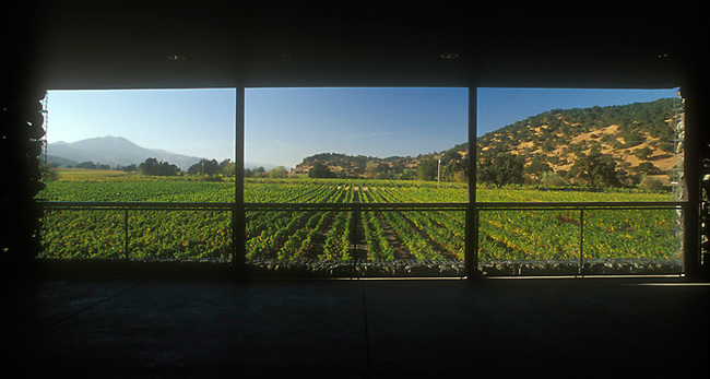 View of vineyards from window of Dominus Estate winery