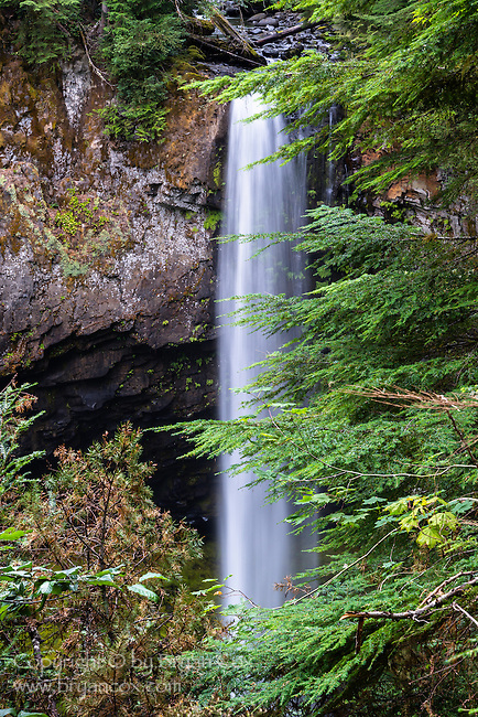 Big Creek Falls, Gifford Pinchot National Forest