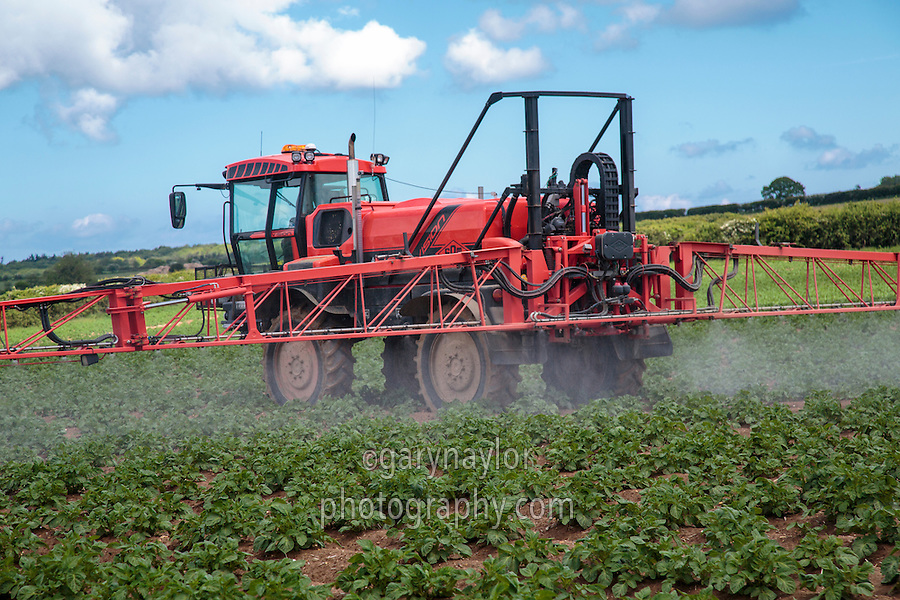 Sands Vision sprayer applying second blight spray to Maris Piper - Norfolk, May