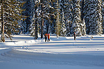 Cross country skiing in Montana. Father and sons skiing through winter scenery at Lolo Pass.