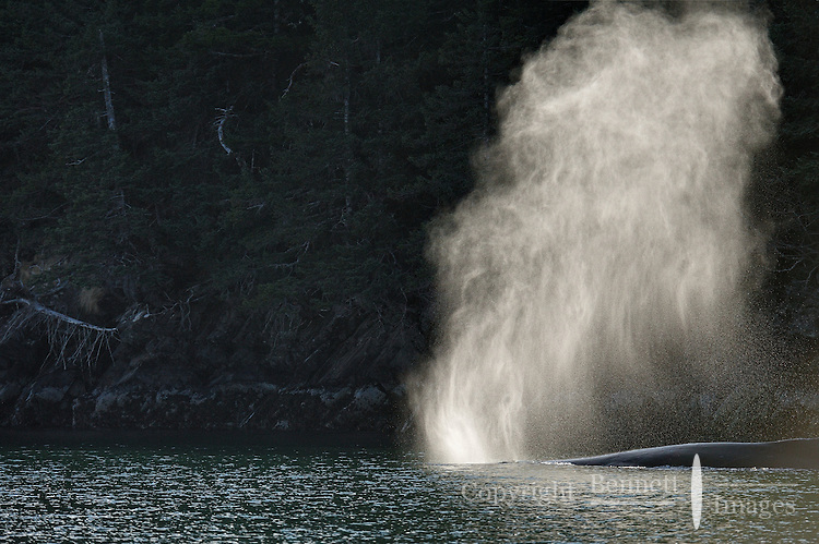 Prince William Sound, Alaska features spectacular scenery and teems with wildlife in early May.