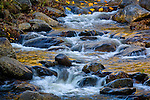 Autumn leaves and a stream in Monroe State Forest, Monroe, The Berkshires, MA, USA