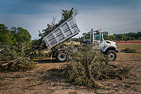A city truck dumps tree debris into a temporary holding yard three days after a storm felled trees and power lines leaving as many as 1 million people without power in Ohio. City crews worked extended 12-hour days to begin clearing fallen trees from city property and debris placed in the berm near city roads.