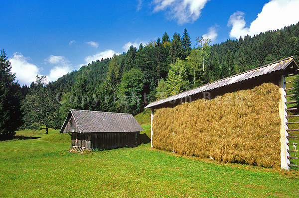 Slovenian style Hayrack, Kozolec, on farm in River Radovna Valley, Triglav National Park, west of Bled, Slovenia, AGPix_0546.