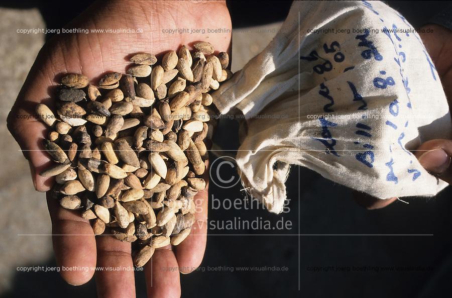 INDIA, farmer prepares a bio pesticide from seeds of Neem tree which is used against pest in organic cotton farming / INDIEN, Bauer nutzt den Samen des Niembaum für natürliche Pestizide für den biologische Baumwollanbau gegen Pflanzenschädlinge