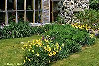 HB05-053x  English Cottage Garden - yellow day lilies, bearded iris - Hemerocallis spp, Iris spp.