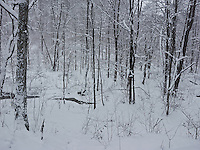 FOREST_LOCATION_90176