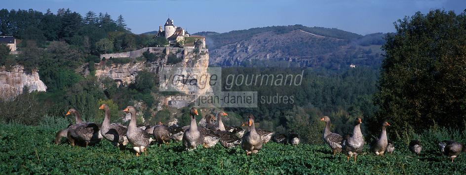 Europe/France/Midi-Pyrénées/46/Lot/Vallée de la Dordogne : Château de Belcastel et élevage d'oie