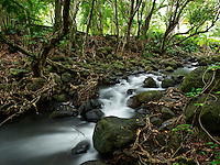 A time-lapse image of a stream with moss-covered boulders on Kaua'i.