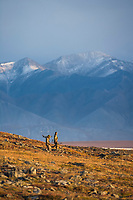Bow hunters hike along the autumn tundra in the Endicott Mountains, Brooks Range, Alaska.