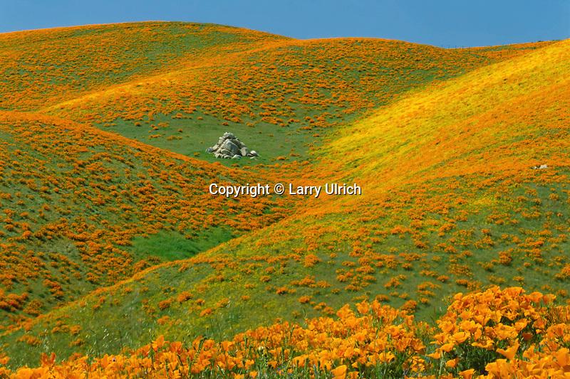 California poppies<br /> Portal Ridge<br /> Antelope Valley<br /> Los Angeles County,  California