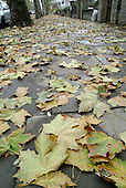 Autumn leaves cover the pavement in St.John's Wood in the City of Westminster, where the street cleaning contract is held by Onyx UK.