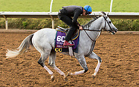 DEL MAR, CA - NOVEMBER 02: Disco Partner, owned by Patricia Generazio and trained by Christophe Clement, exercises in preparation for Breeders' Cup Turf Sprint at Del Mar Thoroughbred Club on November 2, 2017 in Del Mar, California. (Photo by Sue Kawczynski/Eclipse Sportswire/Breeders Cup)