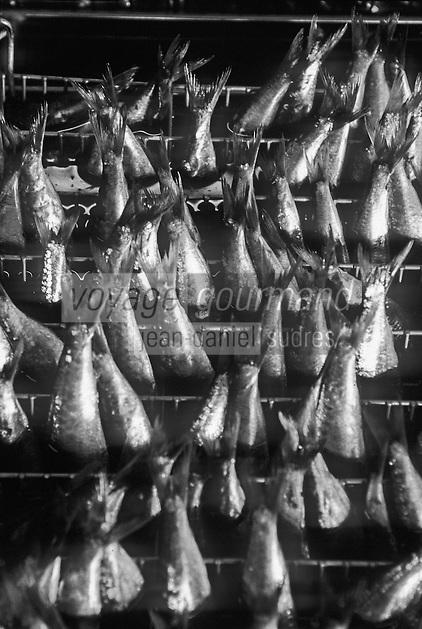Europe/France/Bretagne/29/Finistère/Plovezet: Conserverie de Sardines Capitaine Cook / Sardines Label Rouge-Sur la Chaine d'ététage et d'éviscerage détail