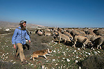 Wearing his 'Tefillin' on his head, an Israeli settler shepherds his sheep near the Israeli settlement of Kochav Hashahar, east of Ramallah, West Bank.